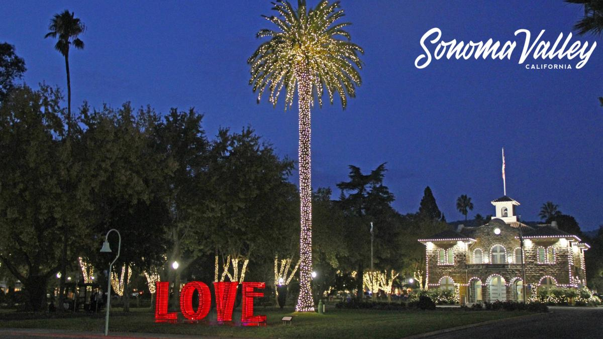 Sonoma palm tree lit up for the holidays in the historic Sonoma Plaza