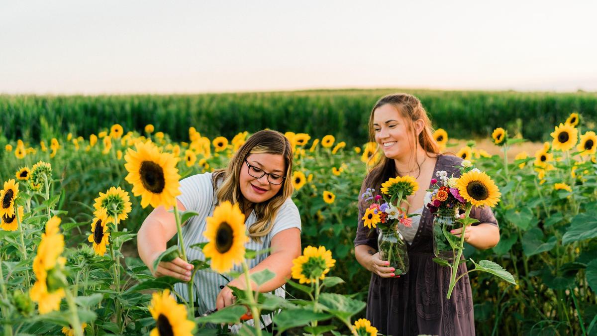 Harvest Tyme Sunflowers