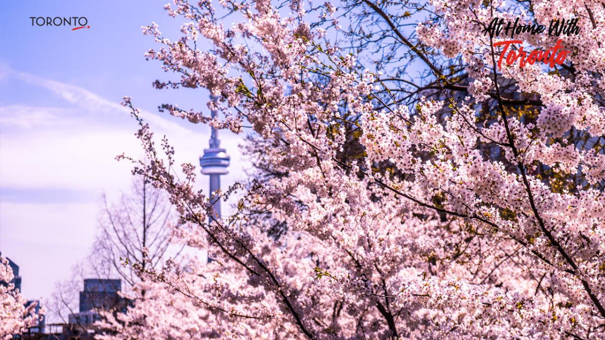 Toronto-Zoom-Backgrounds6