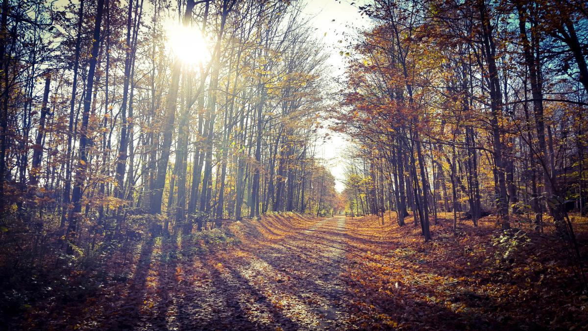 Leelanau Trail