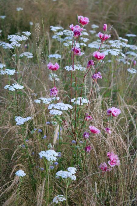 Flowers at Juanita Bay