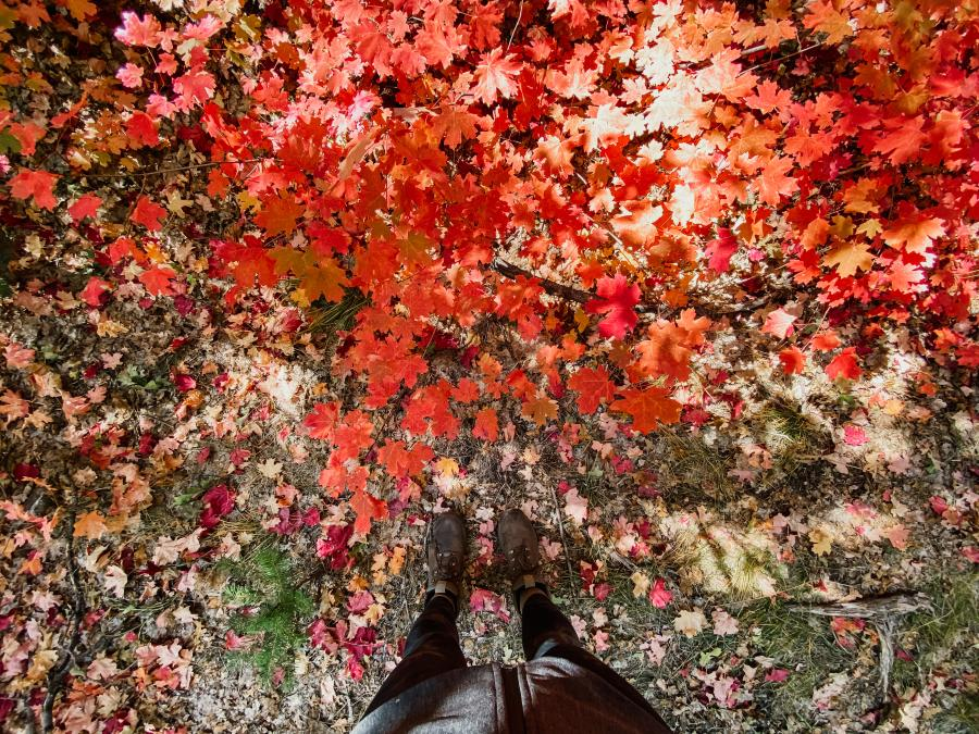 Bright red leaves on the ground at Fourth of July Canyon