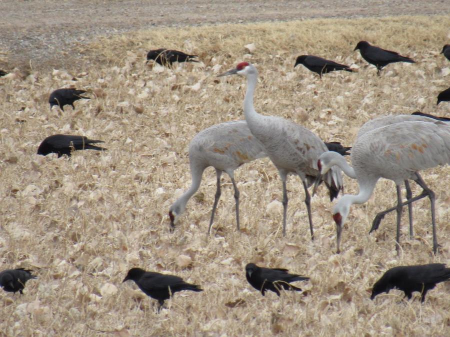 Albuquerque Open Space birds