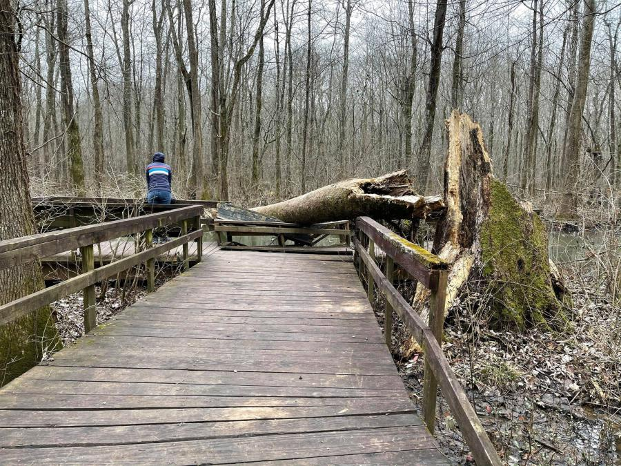Beaverdam Boardwalk