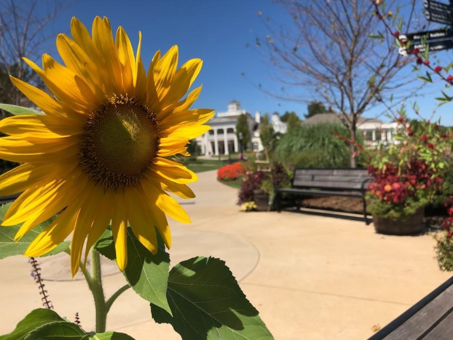 Huntsville Botanical Garden Sunflower