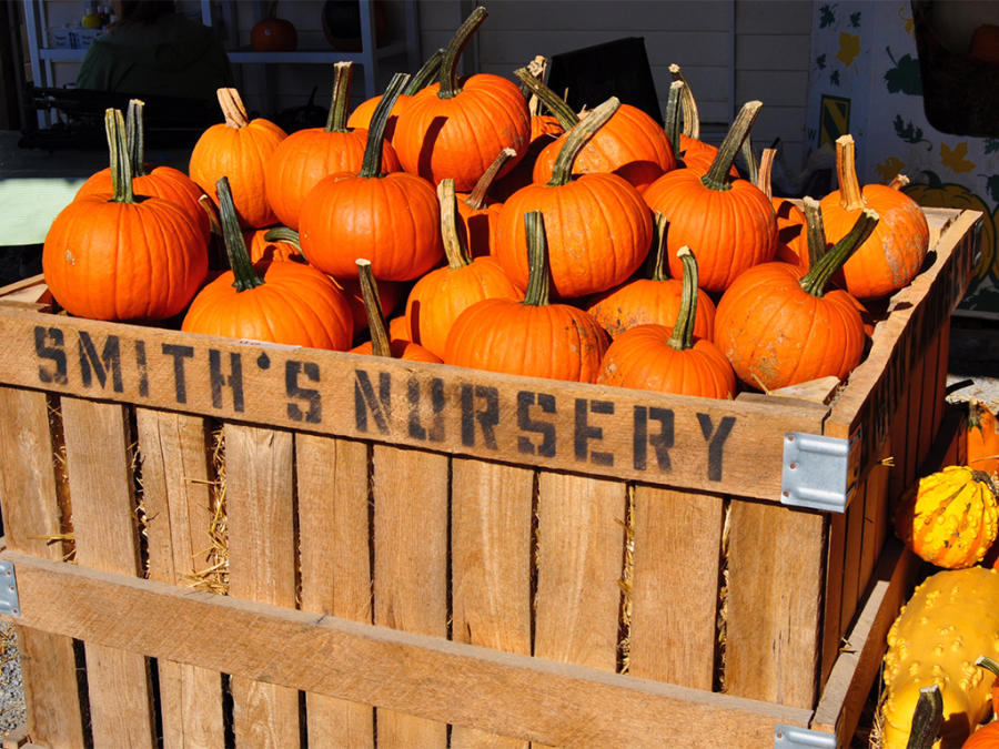Pumpkins for sale in the farm stand at Smith's Farm near Benson, NC.