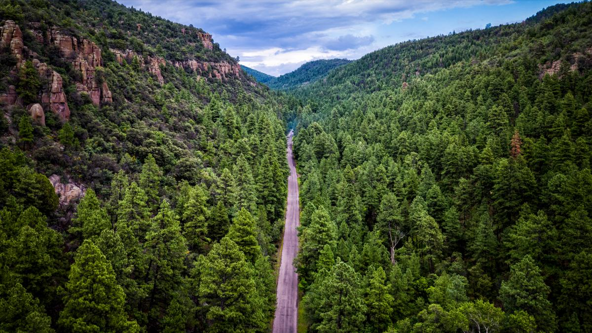 NM 15 in the Gila National Forest