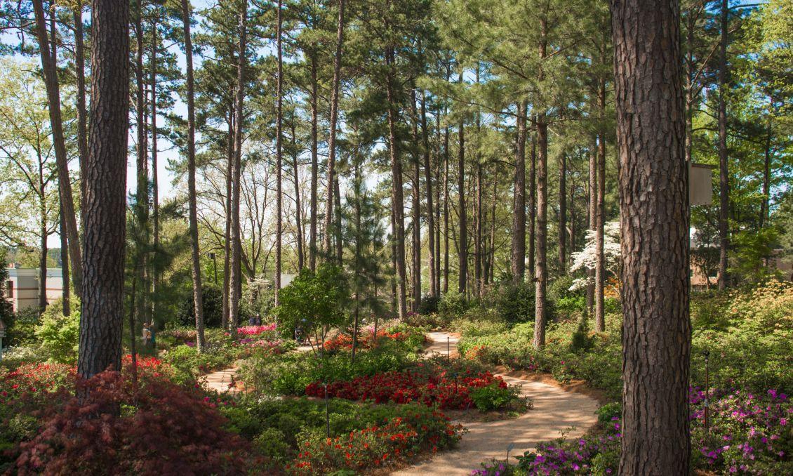 Copy of WRAL Azalea Garden