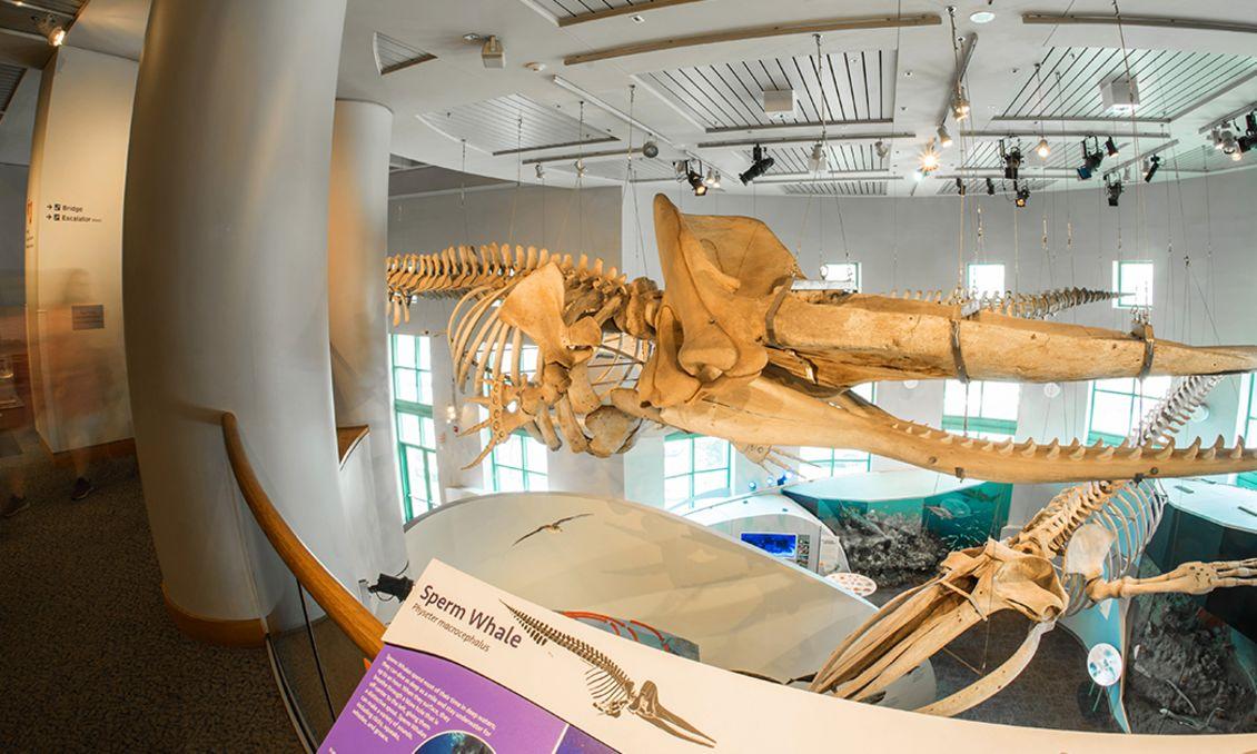 Trouble at North Carolina Museum of Natural Sciences
