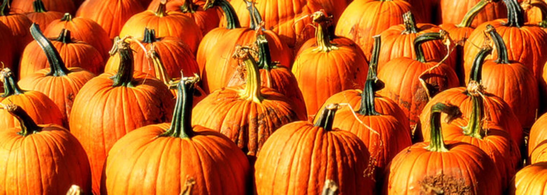 Pumpkins Fall Carter's Mountain