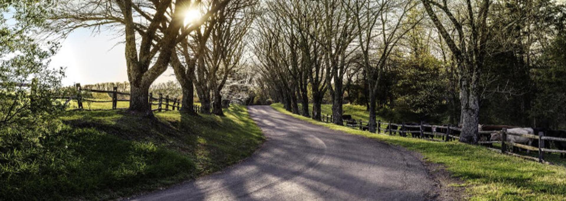 Driveway to James Monroe's Highland