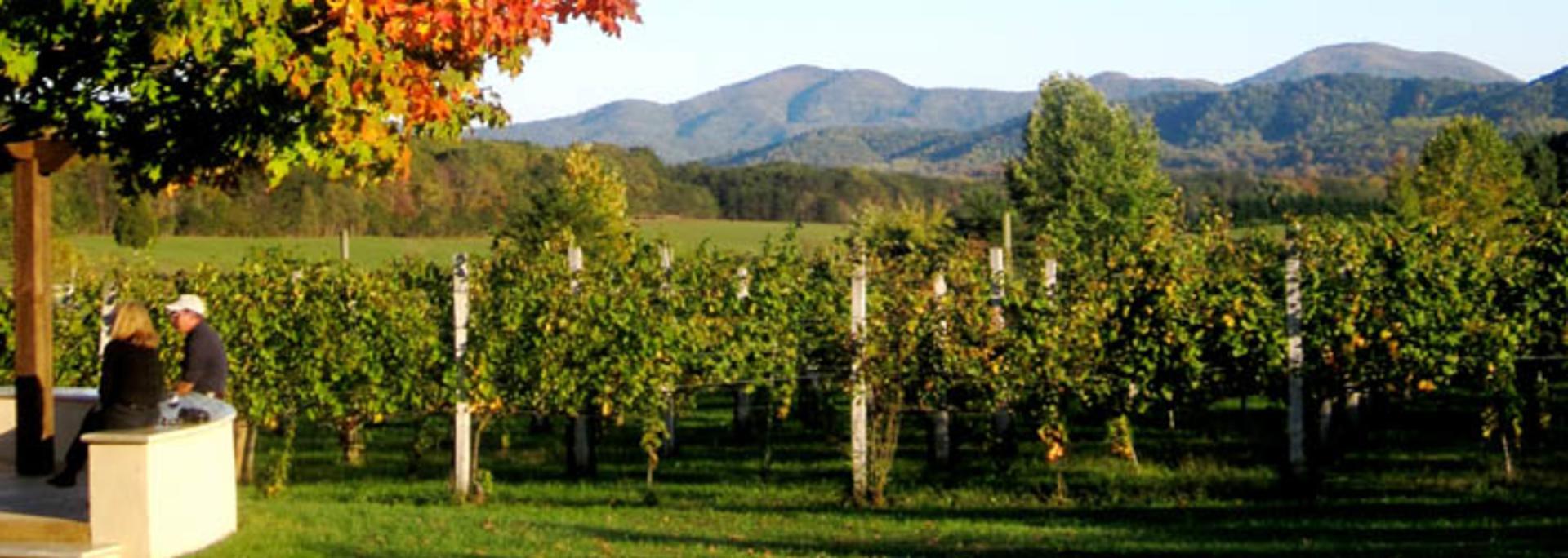 AA- Afton Mountain Vineyard