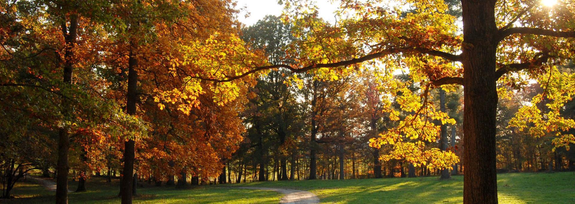 Albemarle County Fall Road