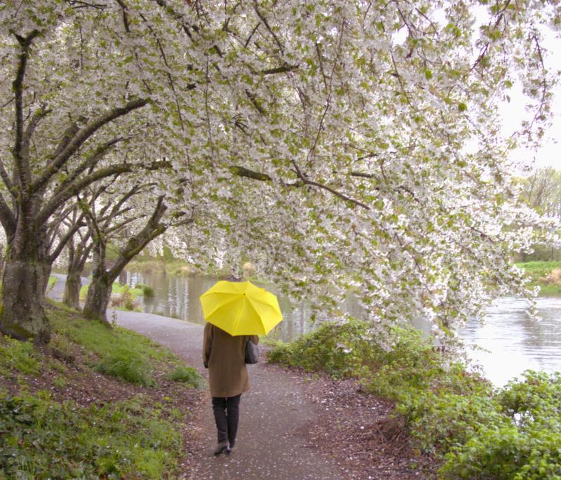 Spring Walk at Alton Baker Park by Guenther Fuernsteiner