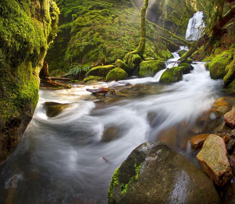 Bridge Creek Rush by David Putzier