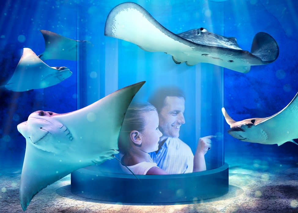 A man and child inside a tube looking at lots of stingrays at the Newport Aquarium