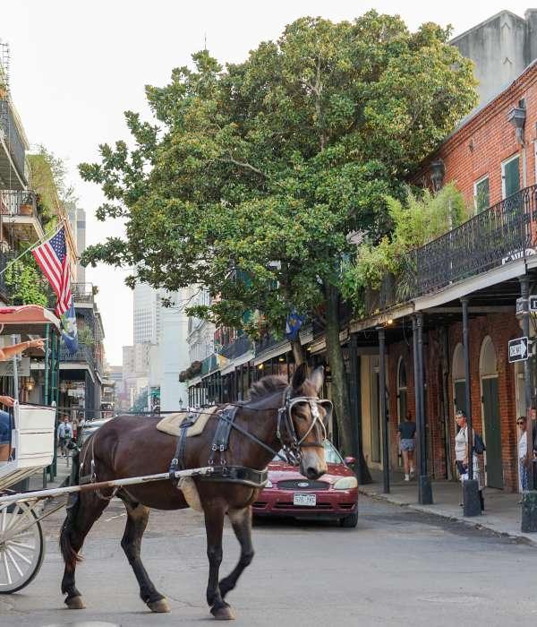 Mulas e carrinhos no French Quarter