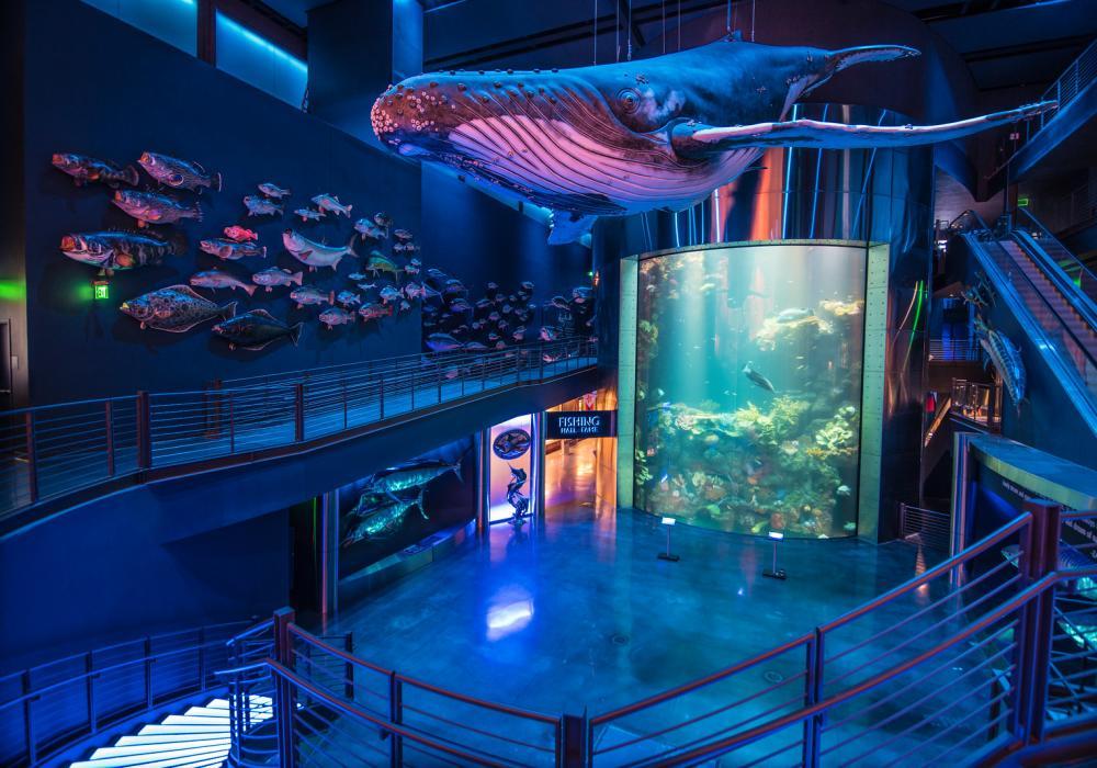 Whale hanging above Wonders of Wildlife Aquarium
