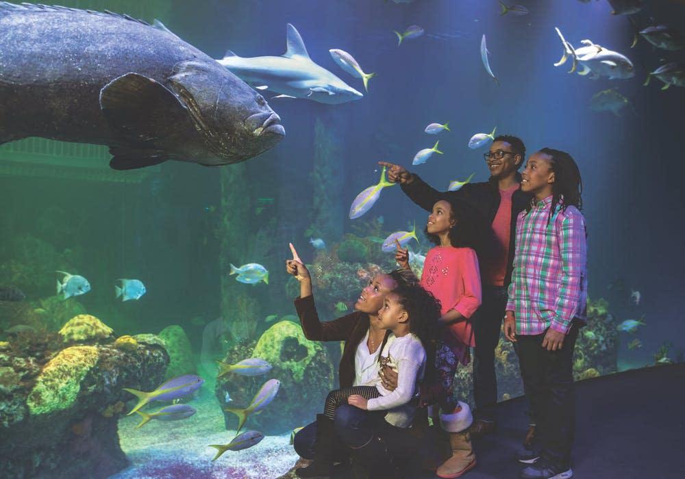 Wonders of Wildlive National Museum & Aquarium