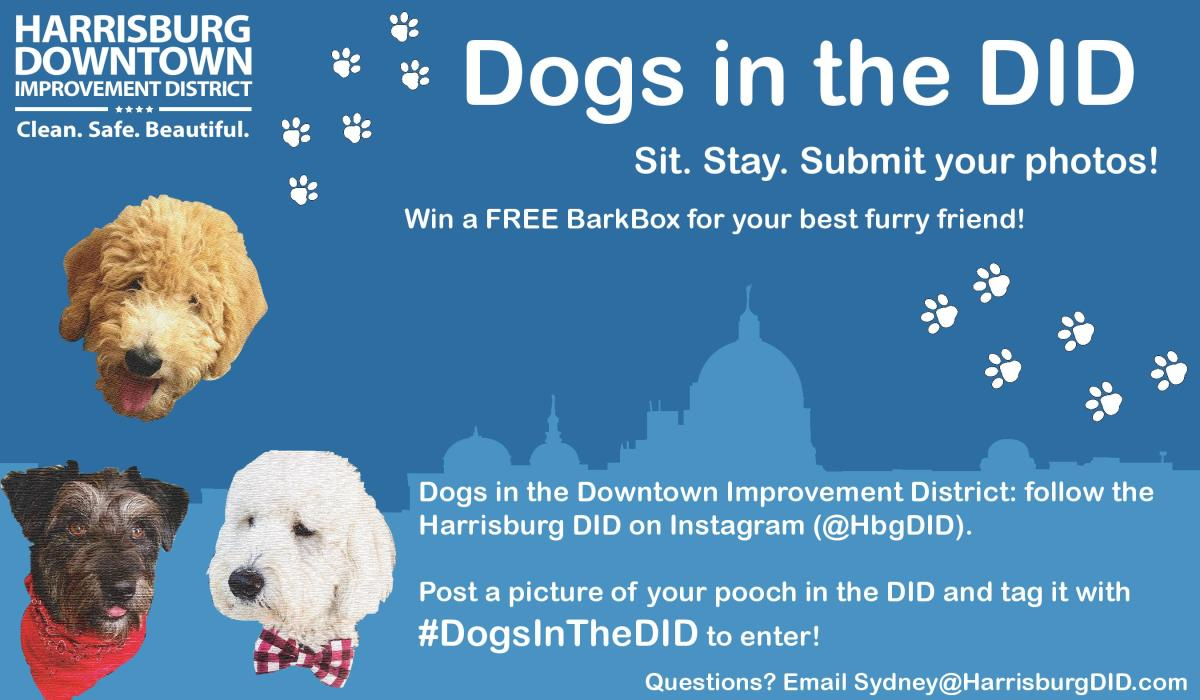 Dogs in the DID Program 20201