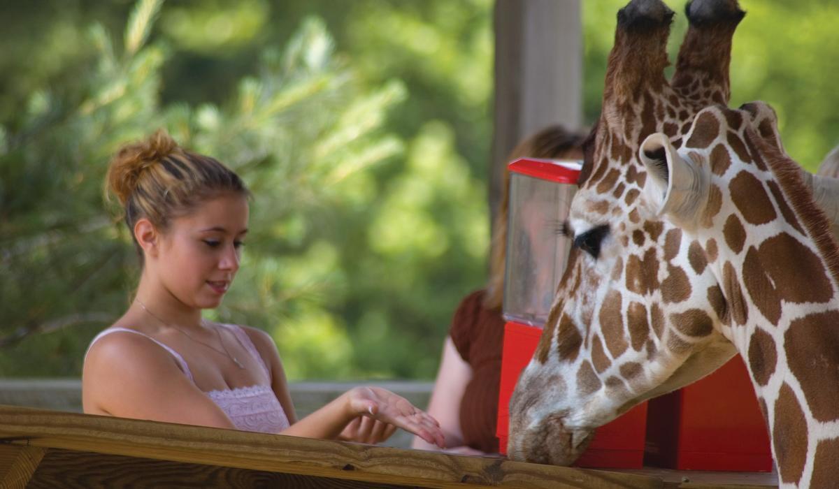 Zoo 700