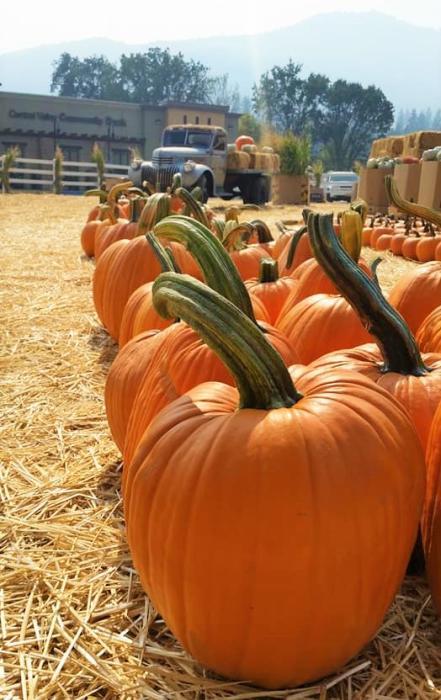 pumpkin king2
