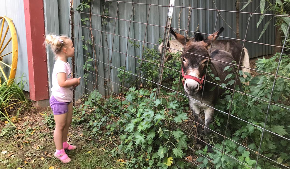 Talking to the animals at Art Barn's Art Blitz 2021