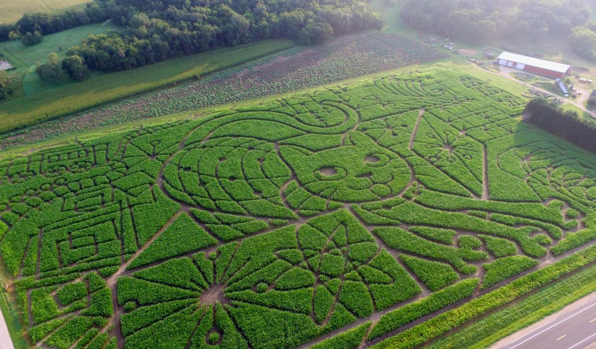 An aerial view of the corn maze at Treinen Farms in Lodi