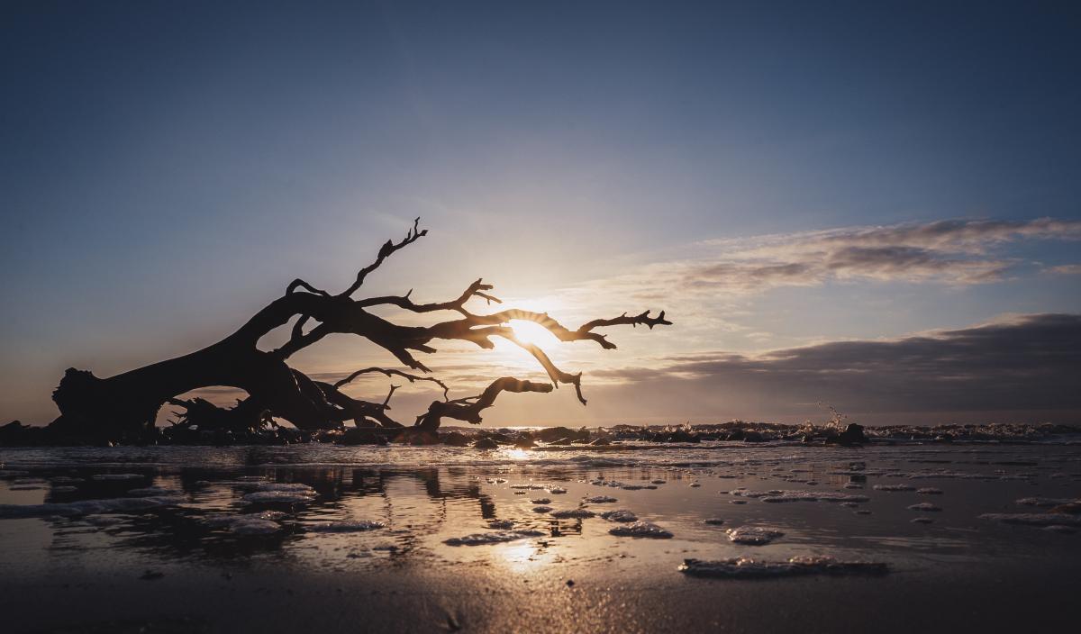 The sun rises above the ocean along the shores of Driftwood Beach on Jekyll Island, GA