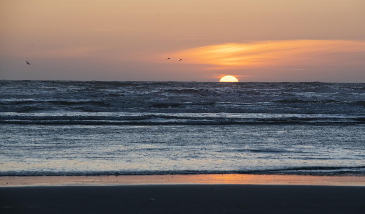 Ocean Sunset - Nick Cote