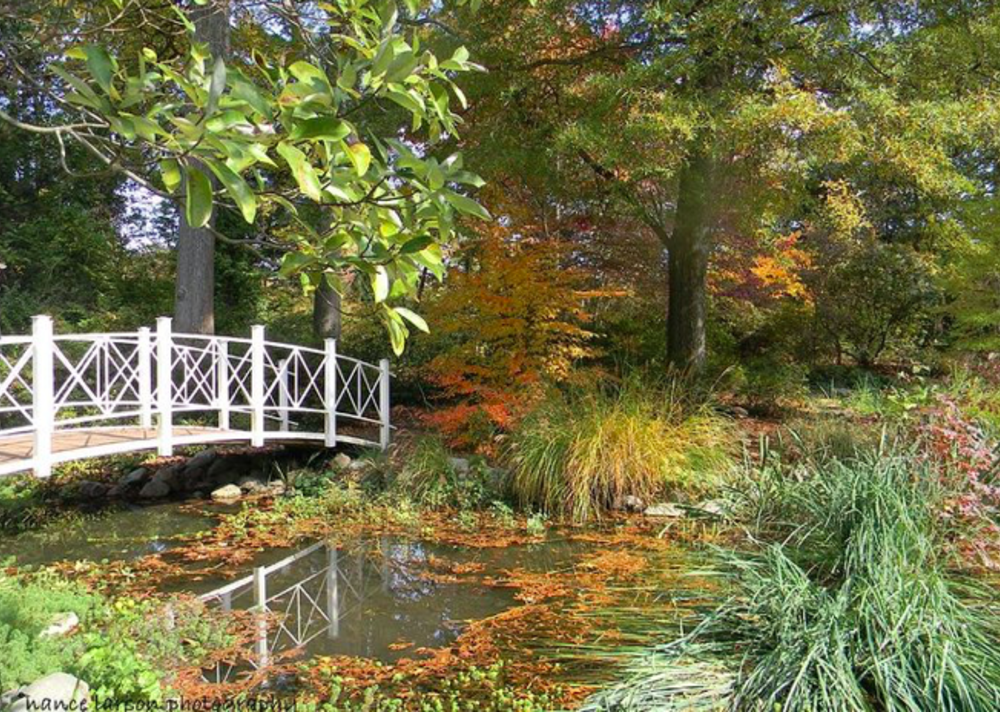 A bridge in sayen gardens surrounded by fall leaves