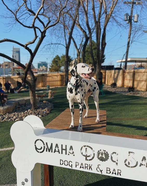 Louie at Omaha Dog Park