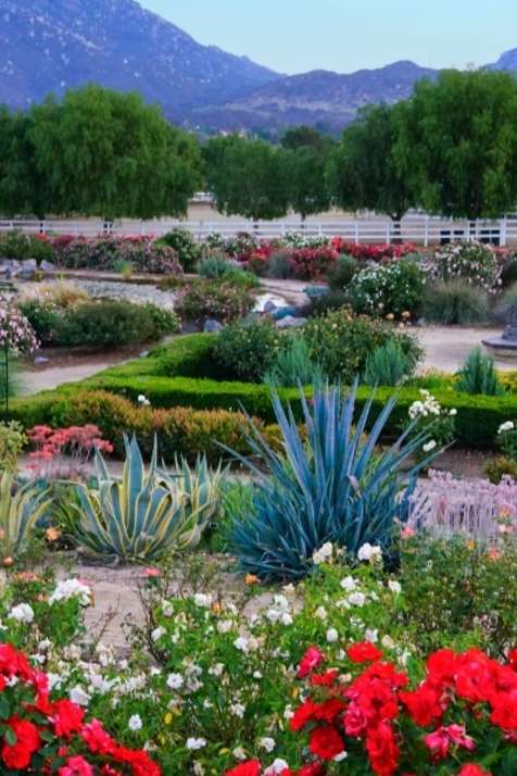 Experience Spring in Temecula Valley