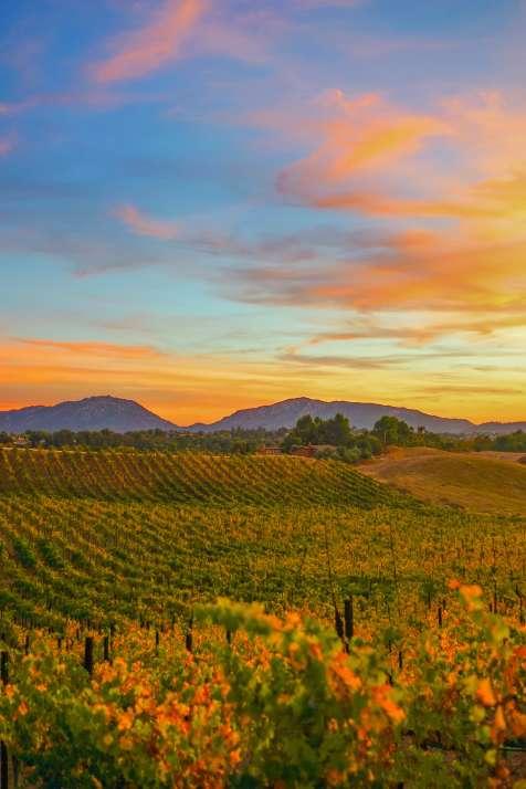 Callaway Winery Sunset