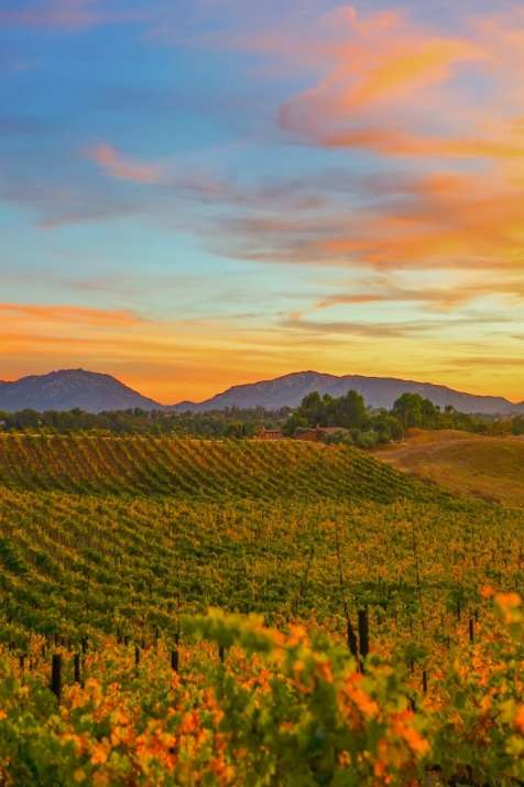 Fall in Temecula Valley