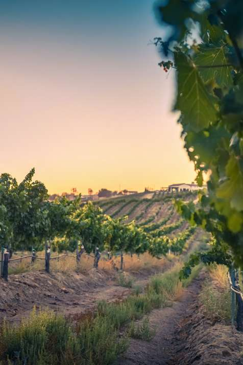Things To Do This Weekend in Temecula Valley