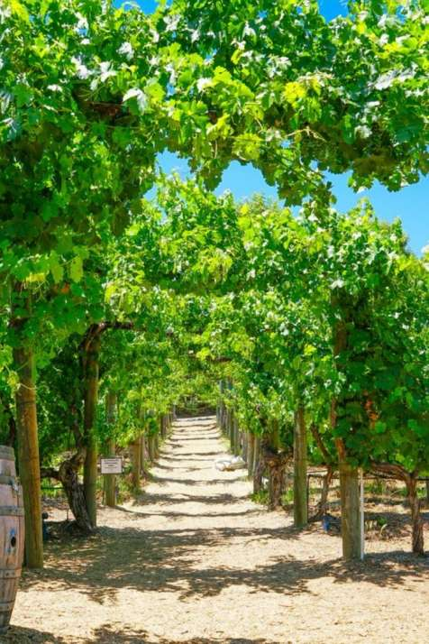 Summer in Temecula Valley