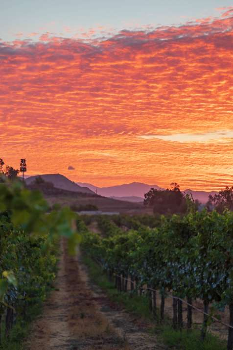 Sunset in Temecula Valley Wine Country