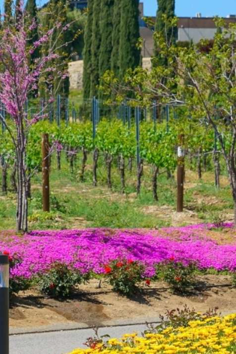 Spring in Temecula Valley