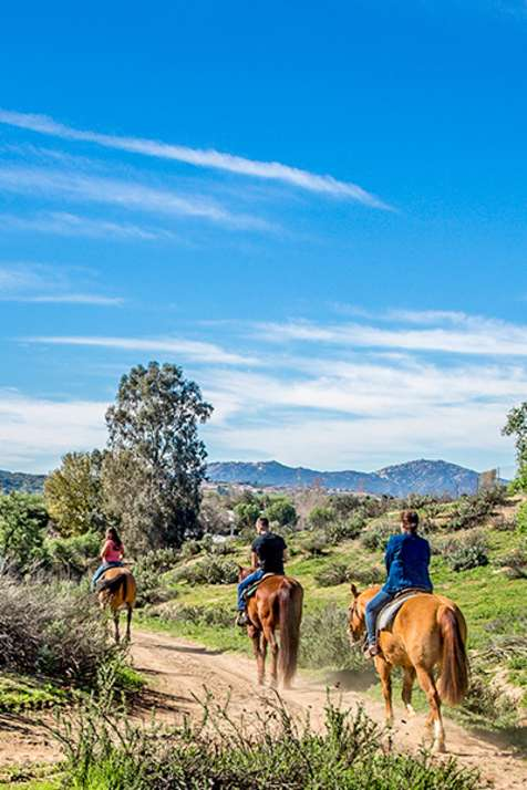 Equine in Temecula Valley