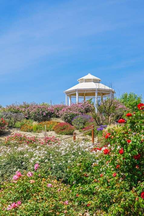 Rose Haven Garden