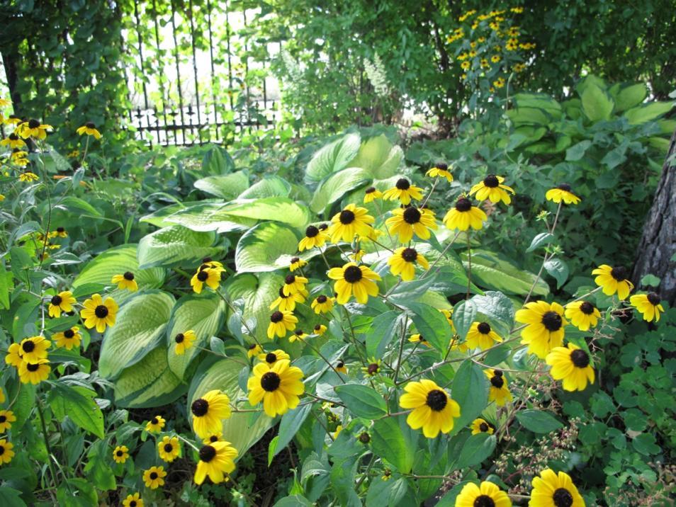 Cooley-Gardens