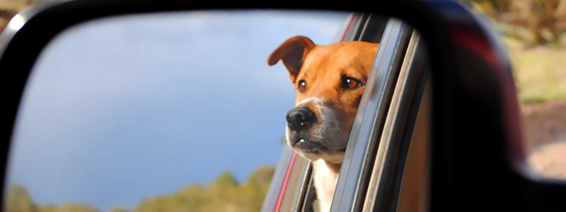 A dog is seen in the side view mirror.
