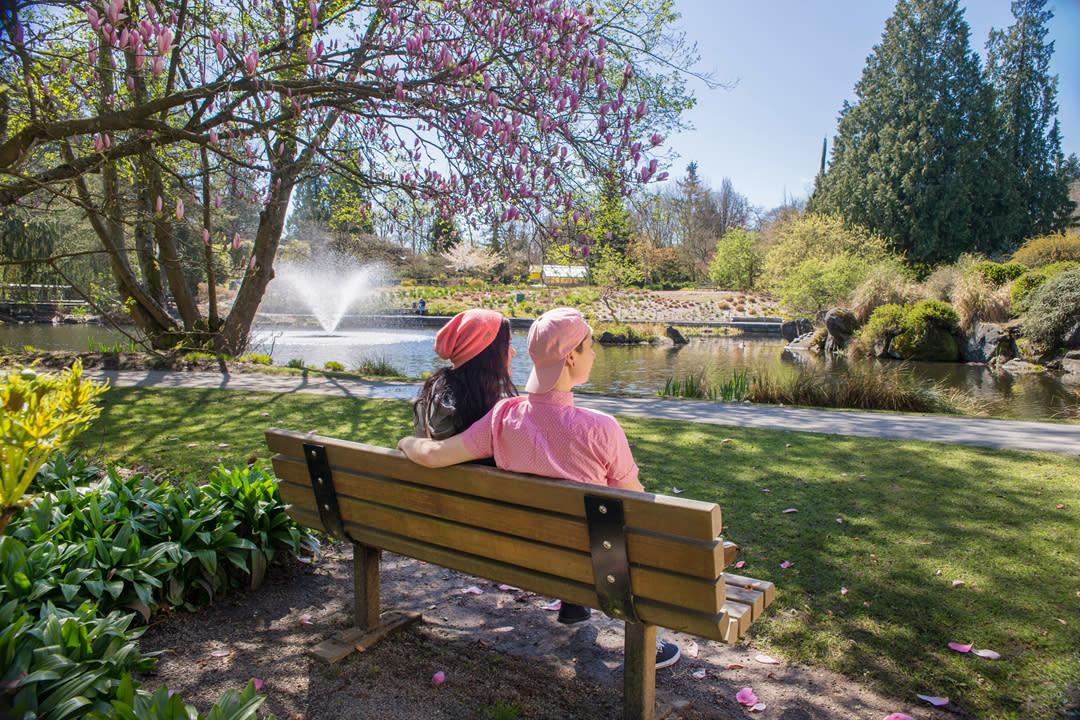 Enjoying the cherry blossoms at Van Dusen Botanical Garden