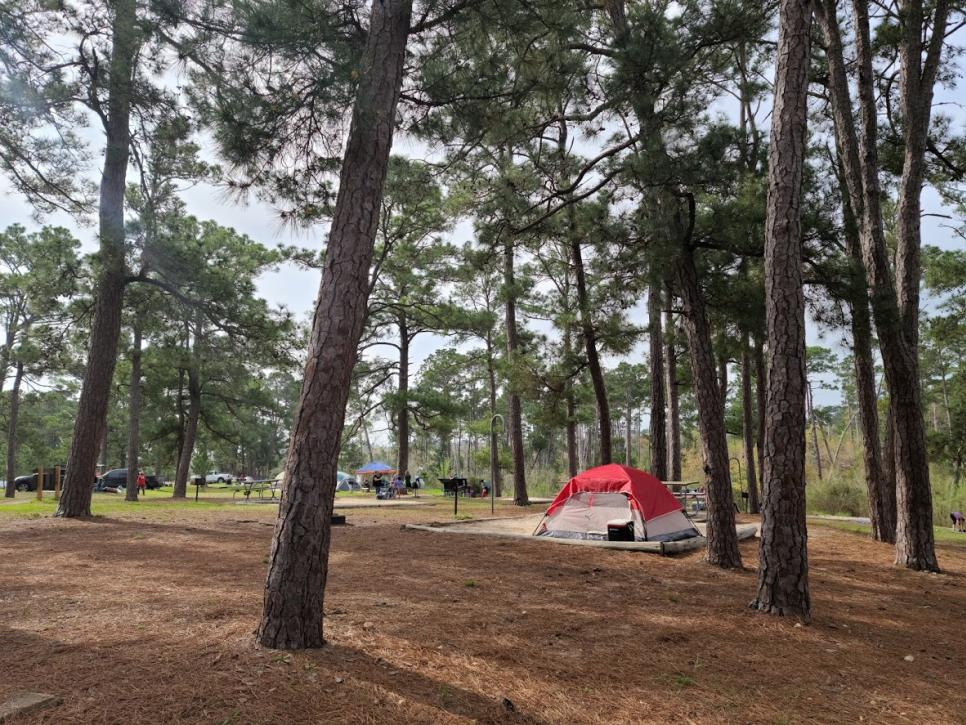 Bastrop State Park Camping