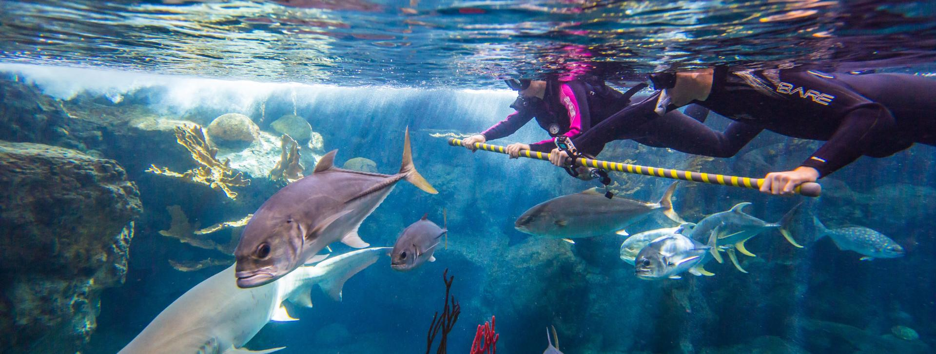 Things To Do In Tampa Florida Attractions Family Fun More