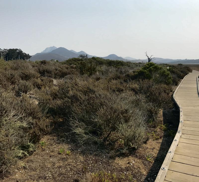 Marina Point Trail