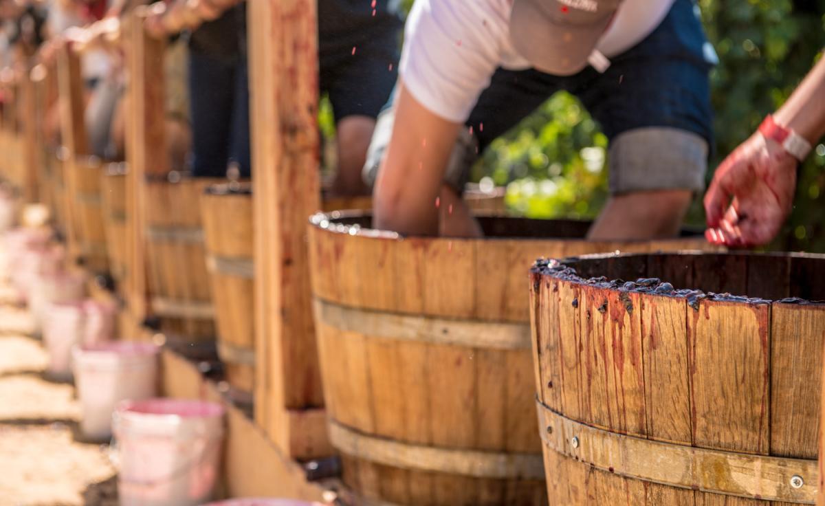 Grape Stomping Buckets
