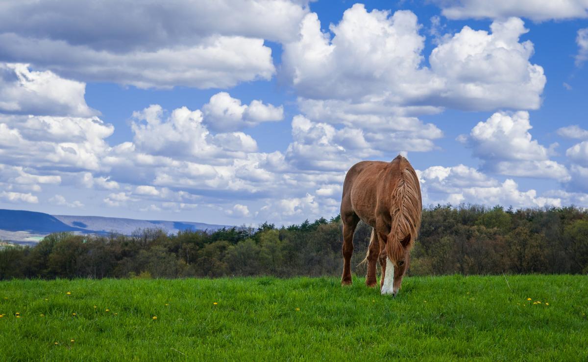 Horseback Riding - Nemacolin