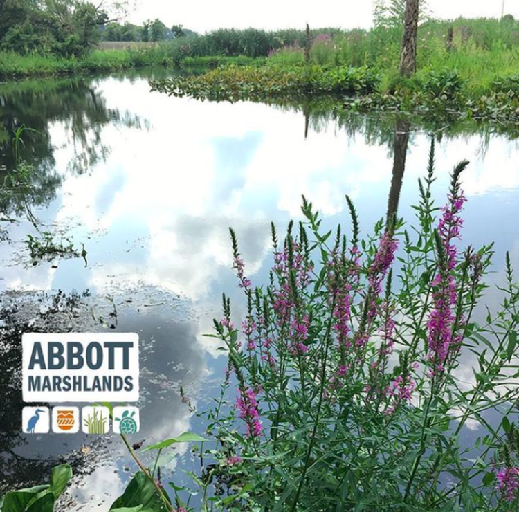 The Abbott Marshlands near Princeton, NJ